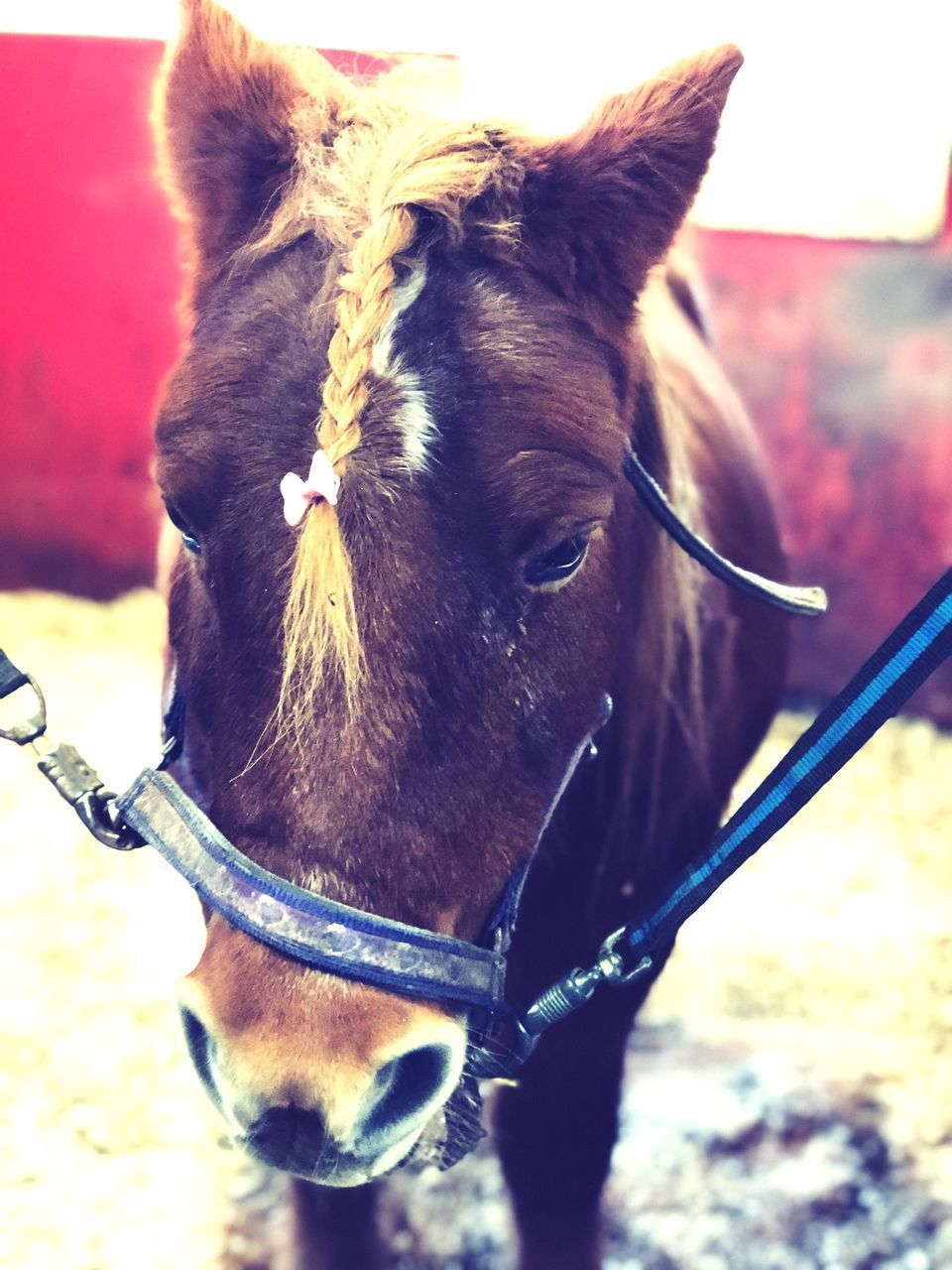 CLOSE-UP OF A HORSE IN THE RANCH
