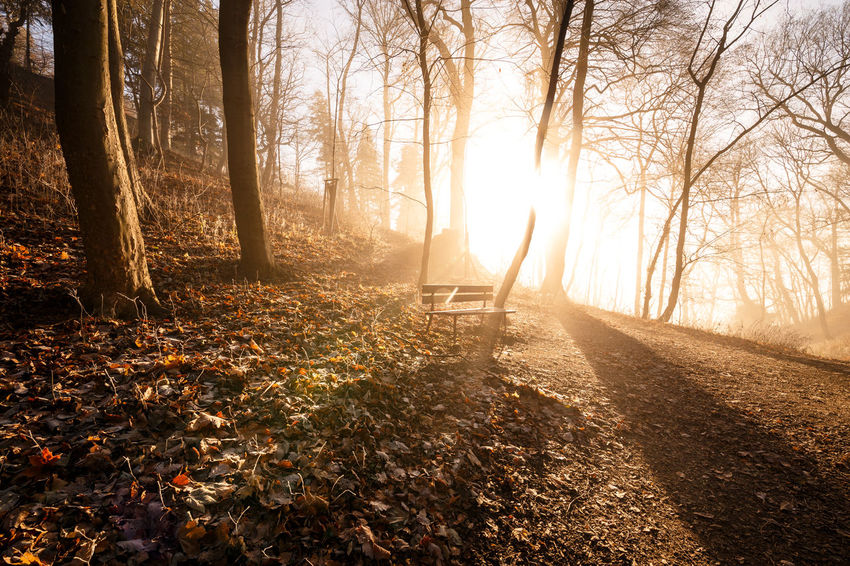 Tree Sunlight Land Autumn Forest Nature Tranquility Sunbeam Plant Sun Beauty In Nature Leaf No People Back Lit Scenics - Nature Plant Part Tranquil Scene Tree Trunk Change Lens Flare WoodLand Outdoors Streaming Bright