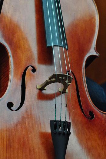 Music Musical Instrument Still Life