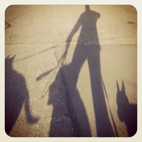 Pack walk. Dogwalker Dogs Silhouette ILoveMyJob Pitbull Chihuahua Chowmix