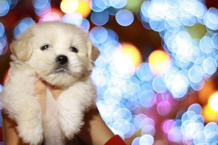 Cute♡ Puppy