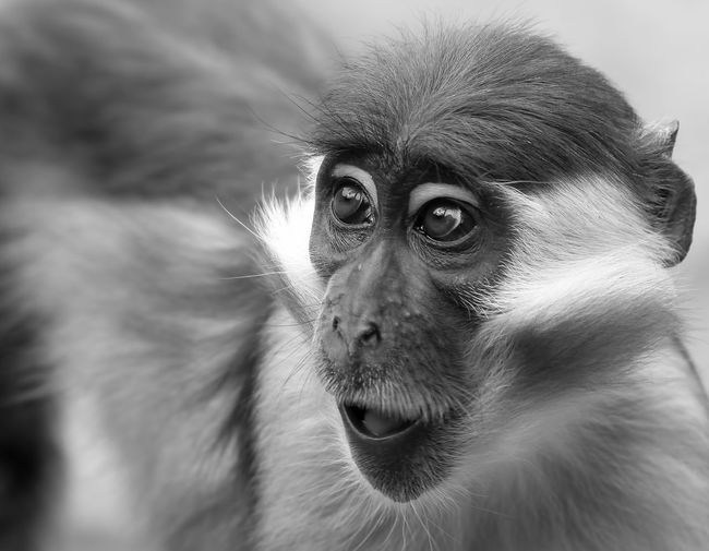 Close-up of cute monkey looking away