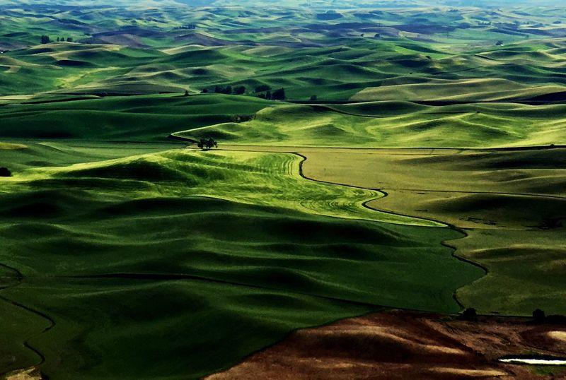 Beautiful green rolling hills of Palouse Steptoe Butte looking down from Steptoe Butte