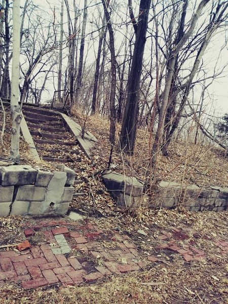 gloomy day in Omaha Omaha, Nebraska Omaha Photographer Le  Landscape TreePorn Trees Cloudy Day Vintage 1800 Staircase Stairs Staircase Stairway L No People Beauty In Nature