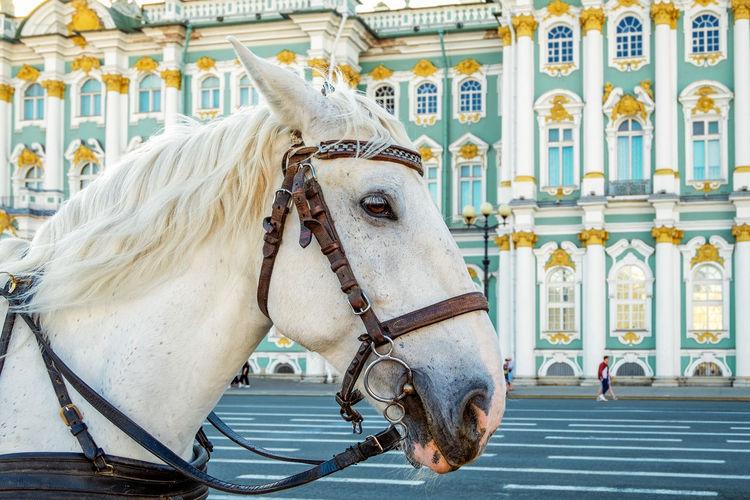Horse cart in street