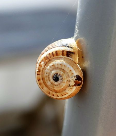 Caracol Close-up Indoors  No People Metal Animal Themes Nature Selective Focus