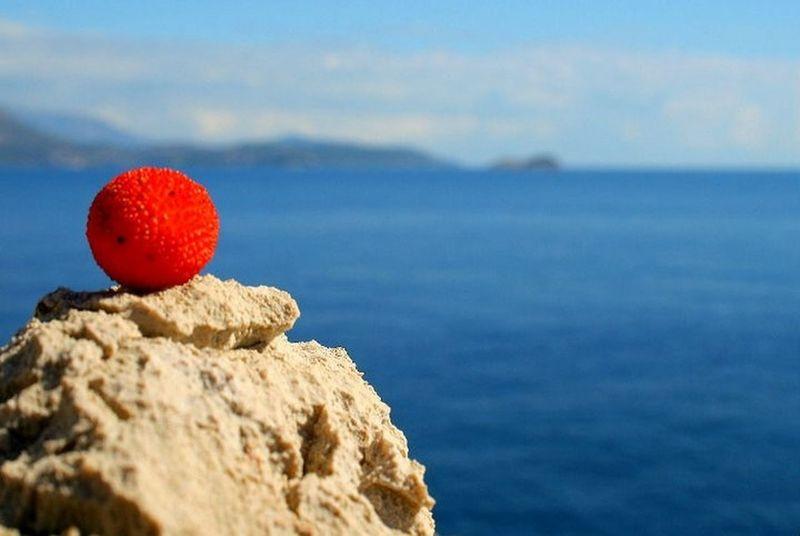 Redberries EyeEm Nature Lover Holiday