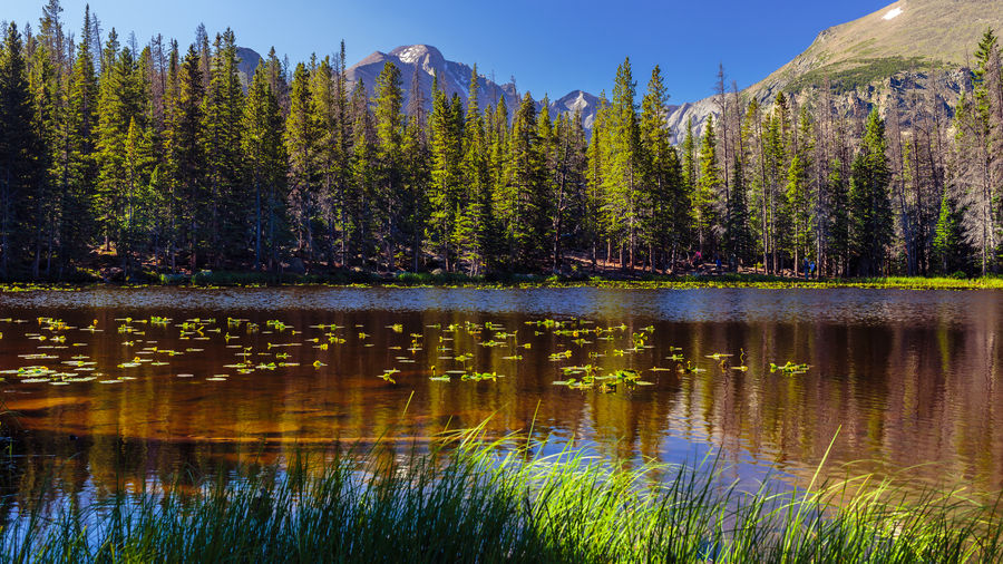 Idyllic shot of trees by lake at rocky mountain national park