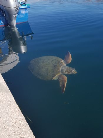 Underwater Water Sea Life Day Nature Outdoors UnderSea Animal Wildlife Kefalonia, Greece Agostoli Seaturtle Second Acts Perspectives On Nature Postcode Postcards Rethink Things EyeEmNewHere AI Now