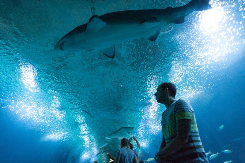 Man At Aquarium