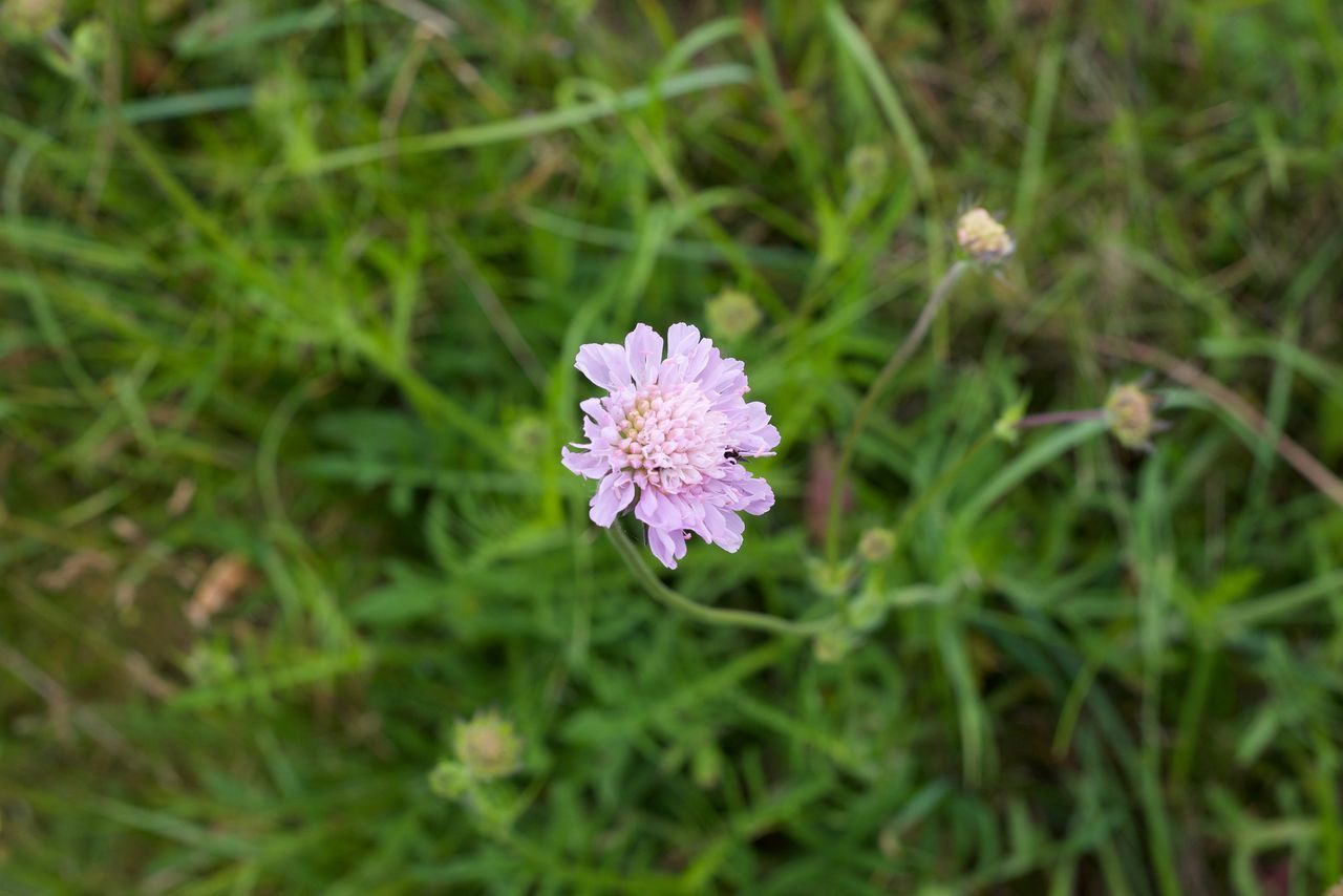 flowering plant, flower, plant, fragility, beauty in nature, vulnerability, freshness, petal, growth, inflorescence, flower head, close-up, purple, nature, day, no people, high angle view, selective focus, focus on foreground, pollen, outdoors