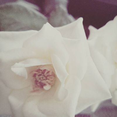 Photoproject365 365photochallenge Clovewebstudio Sept2015 Day 41 of 365 - Roses in the car