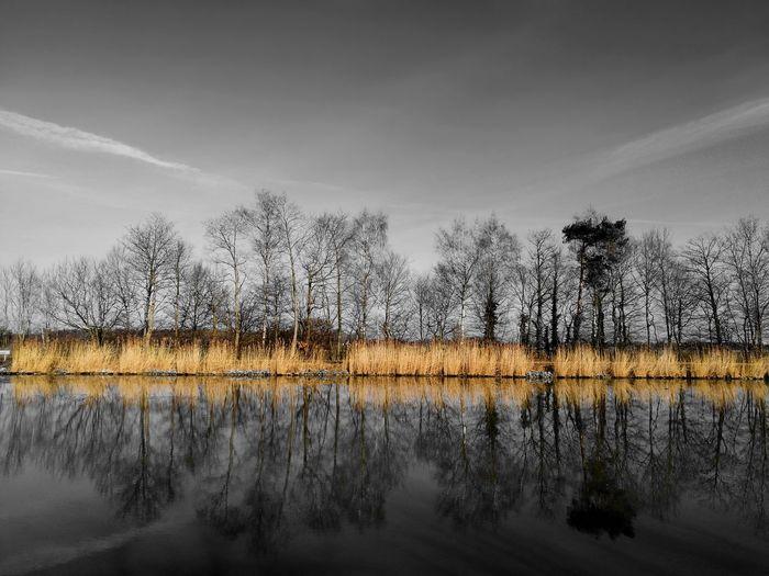 Reflection Animal Wildlife Water Cloud - Sky Tree Animals In The Wild Bird