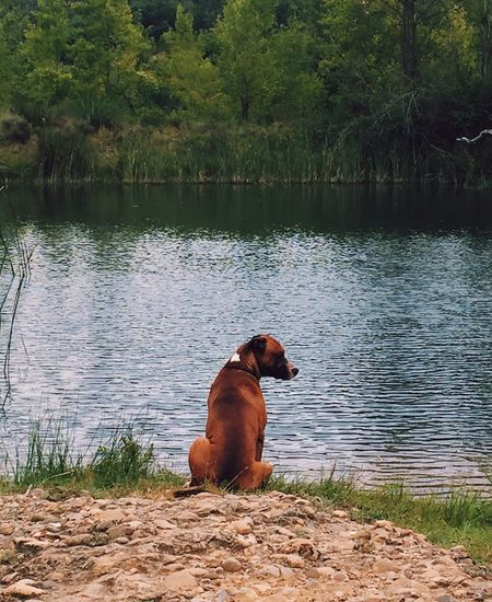 Pet Portraits Sitting Wating Iseeyou Beauty In Nature Animal Themes Throughmyeyes Naturelife Wild Countryside Coldwater Lakeview Wearewaitingyou Aragón Enelpueblo Descubriendo Rincones Descovering Places Secret Places Lonely Place  Justforfun