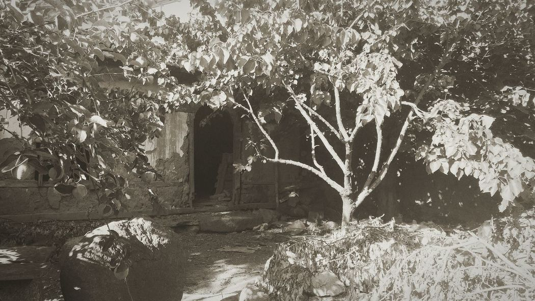 House Story Photography Sunlight Tree Shadow No People Outdoors