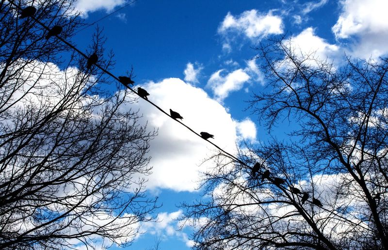 Птицы на