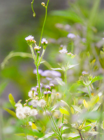 In my dreams and visions, I seemed to see a line, and on the other side of that line were green fields, and lovely flowers. Flower Water Summer Springtime Uncultivated Close-up Grass Plant Green Color