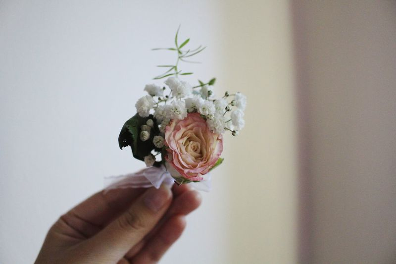 Human Hand Hand Human Body Part One Person Holding Flower Flowering Plant Plant Freshness Fragility Flower Head Human Finger Finger Nature