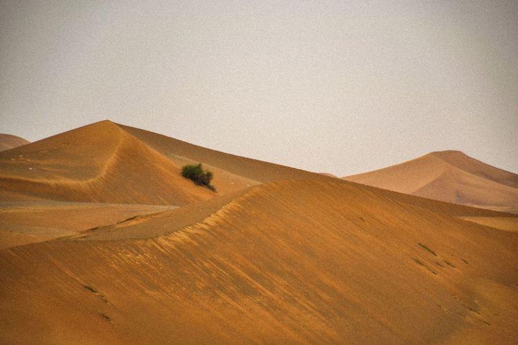 Desert Landscape Land Sand Scenics - Nature Sand Dune Environment