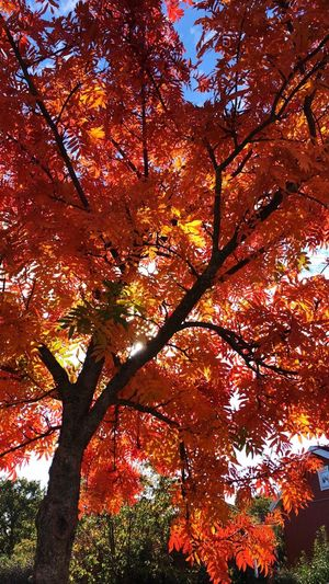 Tree Plant Autumn Low Angle View Branch Beauty In Nature Change