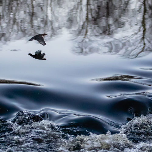 Bird flying over streaming water