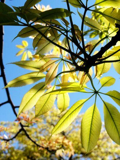 Taking Photos Tadaa Community Nature Green Leaves
