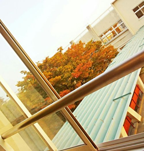 it is Autumn🍁🍁🍁 View From  Myclassroom