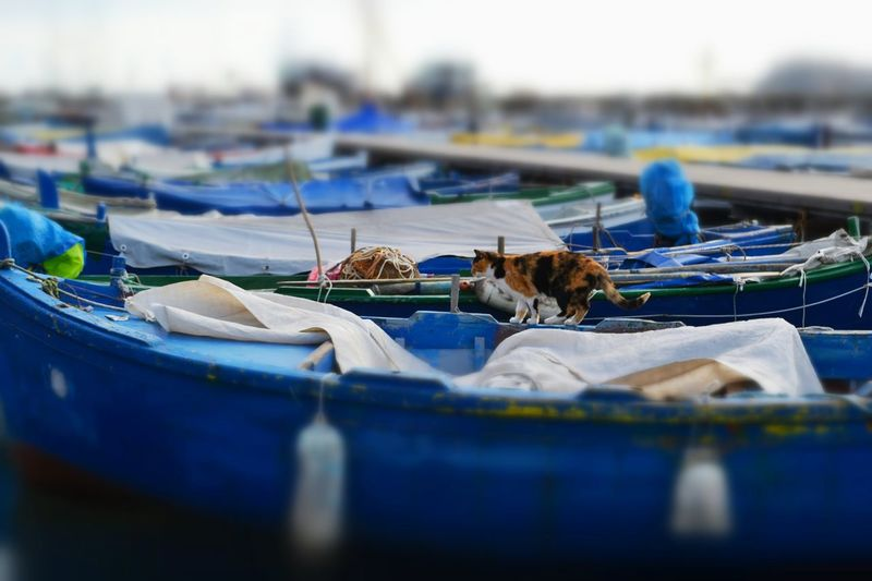 The Wanderer Animal_collection Cat Fishermens Boat