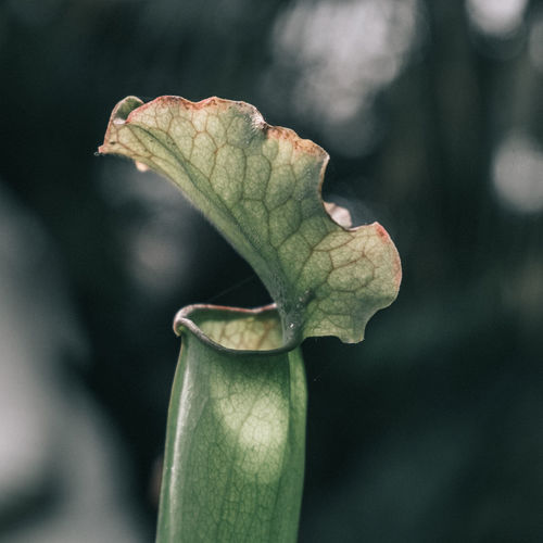 Close-up of green leaf on plant