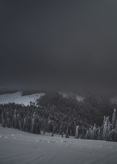 Dark Mood Mountain View Snowy Grey Gray Weather Moody Weather Beauty In Nature Tranquil Scene Scenics - Nature Tranquility Plant Tree Snow Cold Temperature Winter Landscape Sky Environment No People Land Nature Non-urban Scene Snowing Idyllic