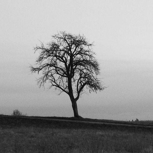 Ich Mag Bäume . Nojoke Blackandwhite Bw Tree Spatzieren Mit @liis_aaa