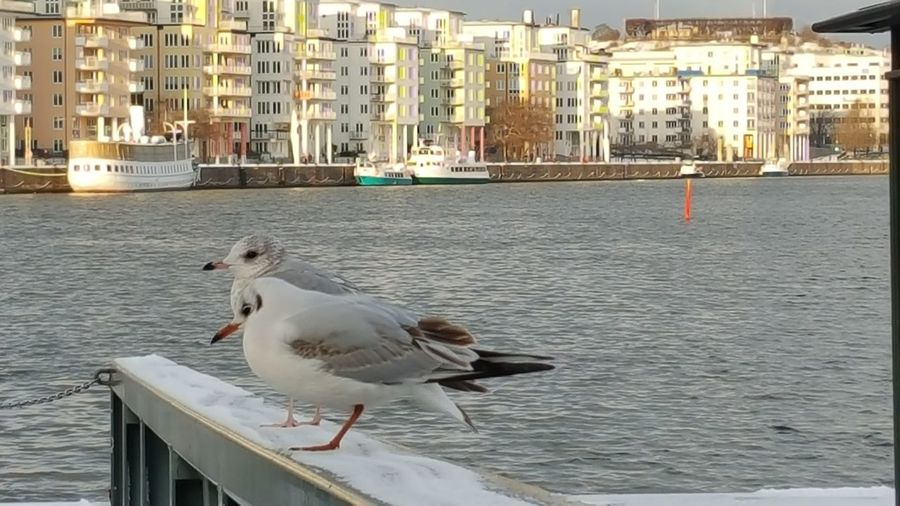 Enjoying The Sights People Watching Showcase: January Streamzoofamily Winter Photography Cold Winter ❄⛄ Stockholm Hello World White Waiting Birds_collection Seagulls January