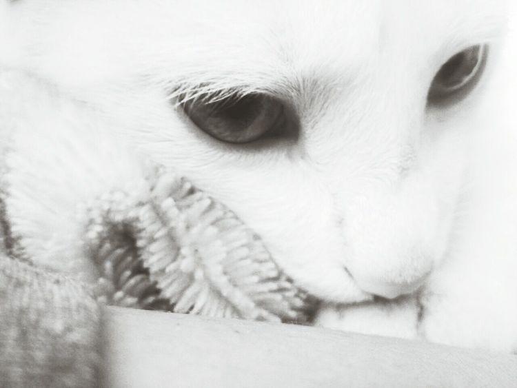 """Tímido"" Cat Black & White Love♥"