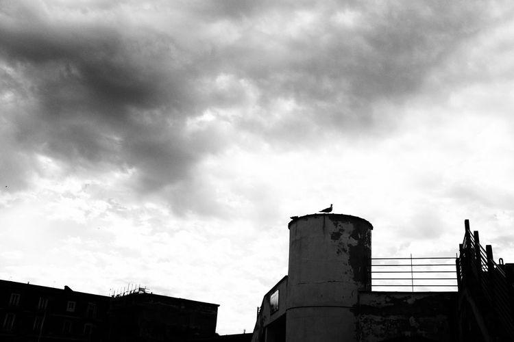 Low Angle View Cloud - Sky Sky No People Animal Themes ProvokeCamera Provoke Camera Provoke Black And White Photography Black & White Photography Blackandwhite Photography