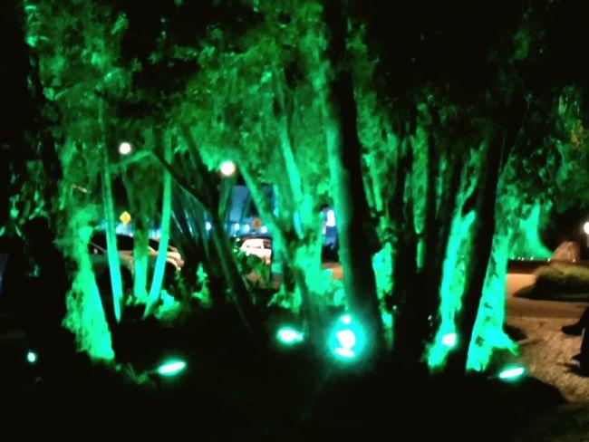 Creative Light And Shadow Tree Arvore Ilumination