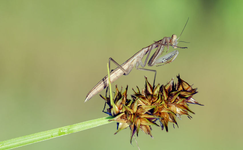 Close-up of insect perching on plant