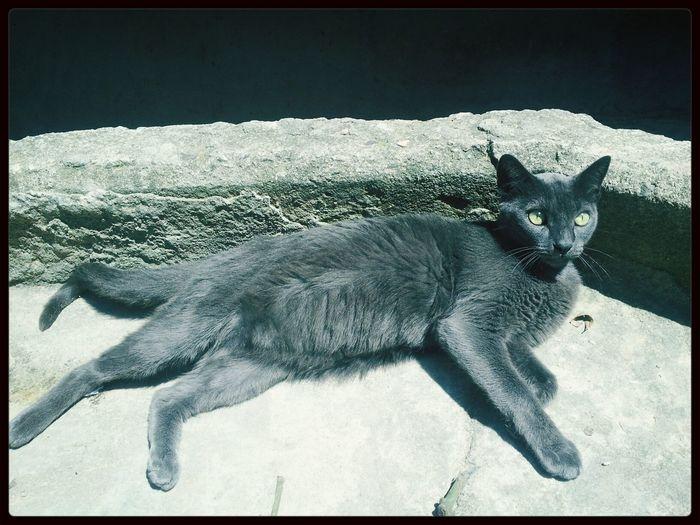 Perfection! Cats Inlove♥ T.U.L.