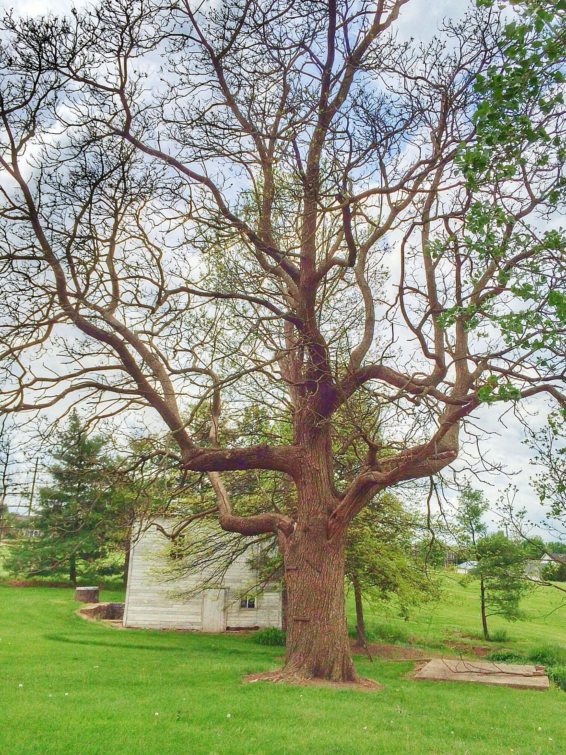 tree, branch, growth, tree trunk, green color, nature, built structure, tranquility, grass, bare tree, architecture, sky, building exterior, day, outdoors, beauty in nature, plant, field, no people, tranquil scene