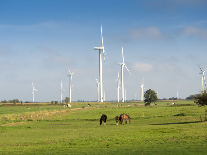 Germany Environment Field Wind Turbine Land Animal Themes Environmental Conservation Turbine Fuel And Power Generation Mammal Alternative Energy Renewable Energy Animal Grass Sky Landscape Livestock Domestic Animals Domestic Group Of Animals Pets No People Outdoors Herbivorous
