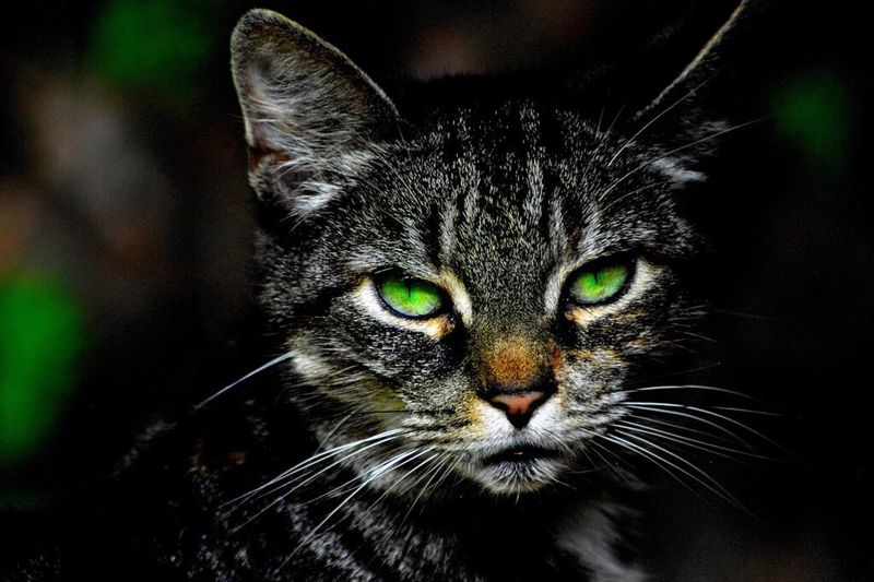 CAT with green