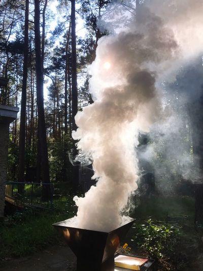 Rauch Tree