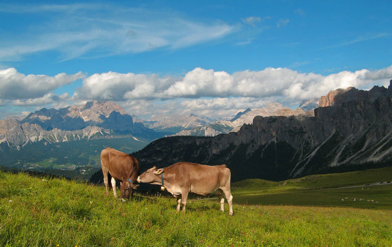 Alps Clouds Clouds And Sky Cow Cows Dolomites, Italy Domestic Cattle Farm Farmer Geology Grass Hiking Landscape Milk Mountain Mountains Nature Sky