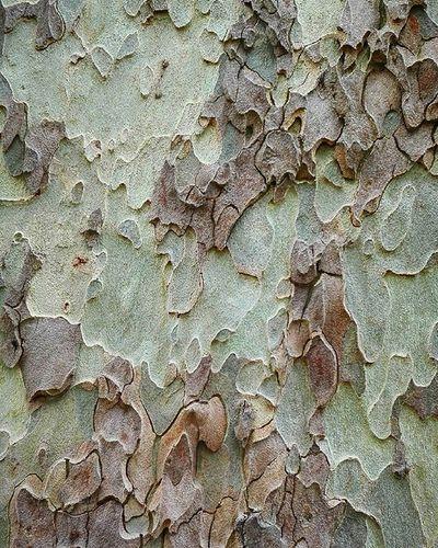 Tree Treebark Brown Trunk Rsa_trees Rsa_nature Rebelsunited_nature Tt_rt_nature Birds_bees_flowers_n_trees Natureromantix Wmm_brown