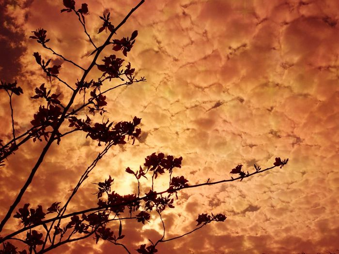 Fantastic evening Cloud - Sky Tree Sunset Branch Flower Silhouette Sky Blooming