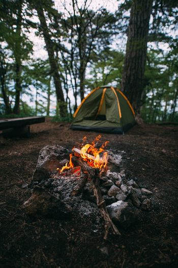 Кемпинг Tourism Tree Plant Nature Fire Burning Fire - Natural Phenomenon Flame Tree Trunk Trunk Forest Land Camping No People Orange Color Day Field Bonfire Heat - Temperature Growth Outdoors