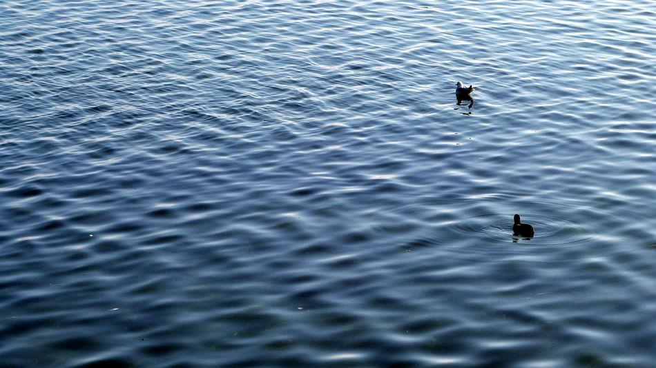 Lac La Suisse Canards Eau