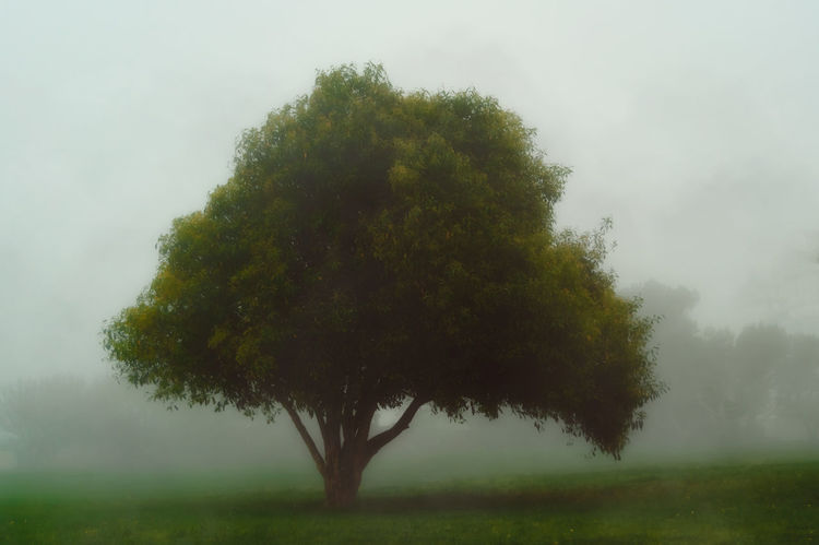 Loneliness Beauty In Nature Day Dream Dreamy Environment Fog Foggy Foggy Day Foggy Morning Grass Grass Green Growth If Trees Could Speak Landscape Mist Misty Misty Morning Nature No People Outdoors Single Tree Sky Tranquility Tree