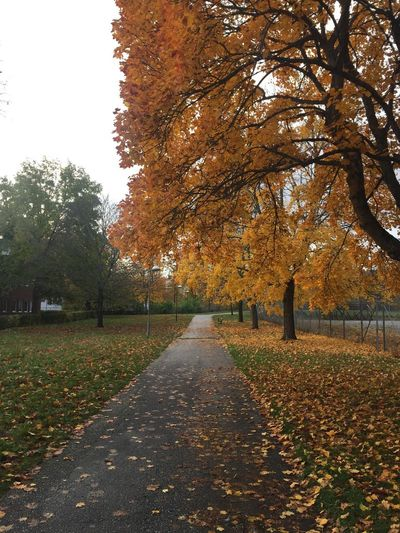 Footpath amidst leaves in park during autumn