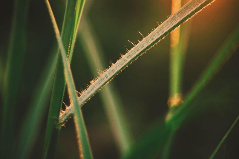 EyeEmNewHere EyeEm Selects Art Illustration EyeEm Best Shots EyeEm Nature Lover Light Light Up Your Life Sunlight Close-up Plant Green Color Grass Sky Blade Of Grass