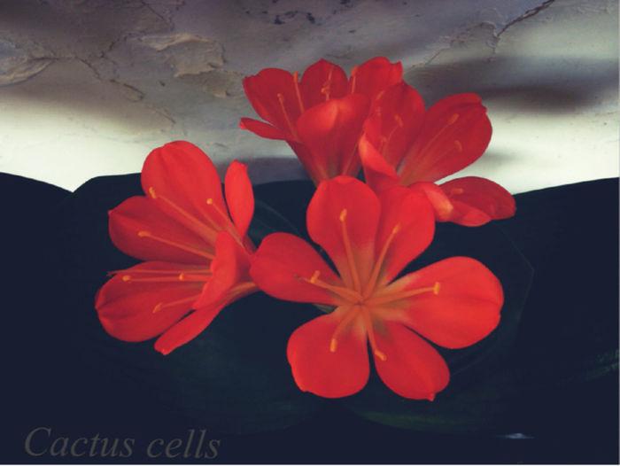 Flowers 兰